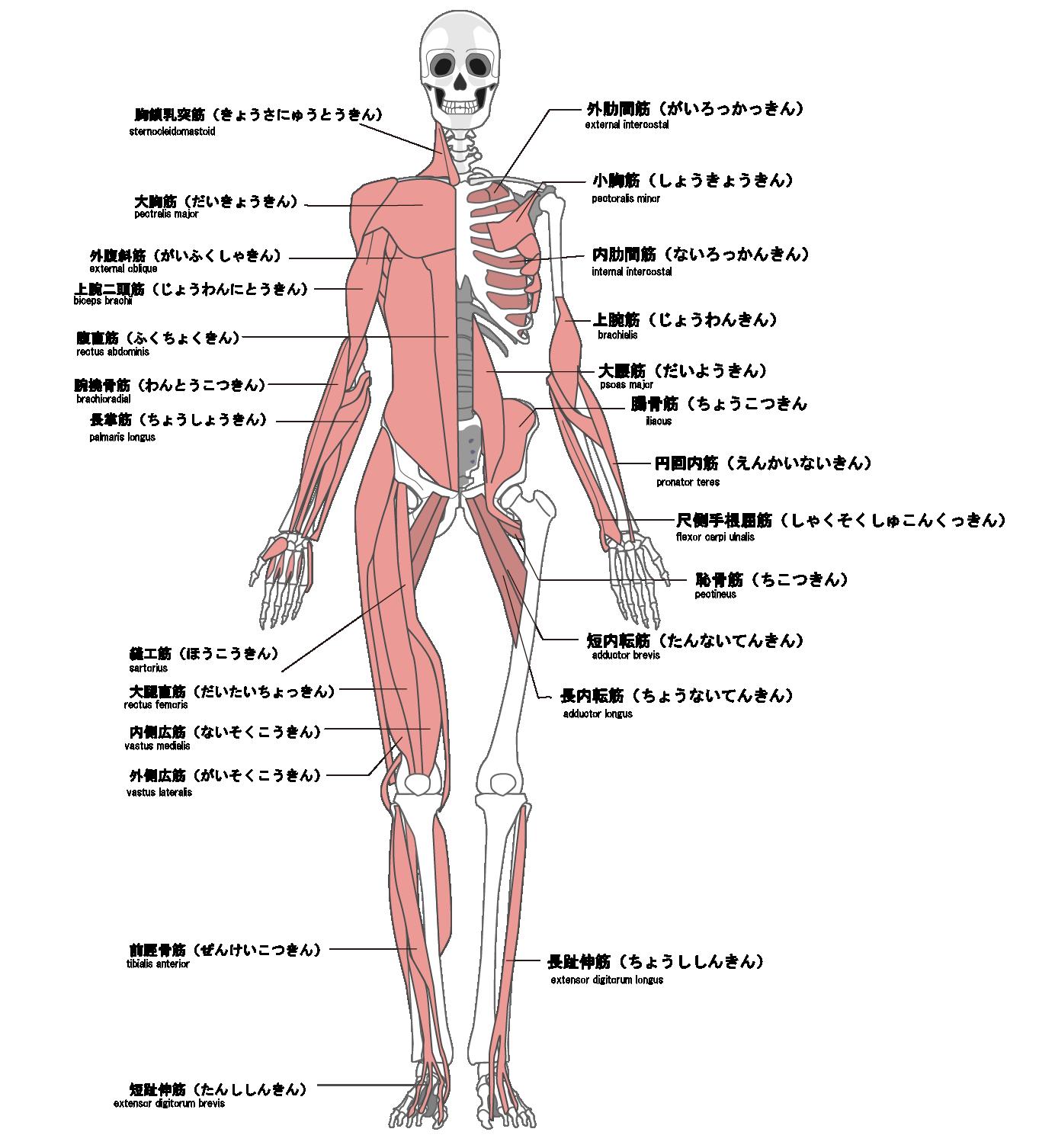 全身の筋肉を調整 前
