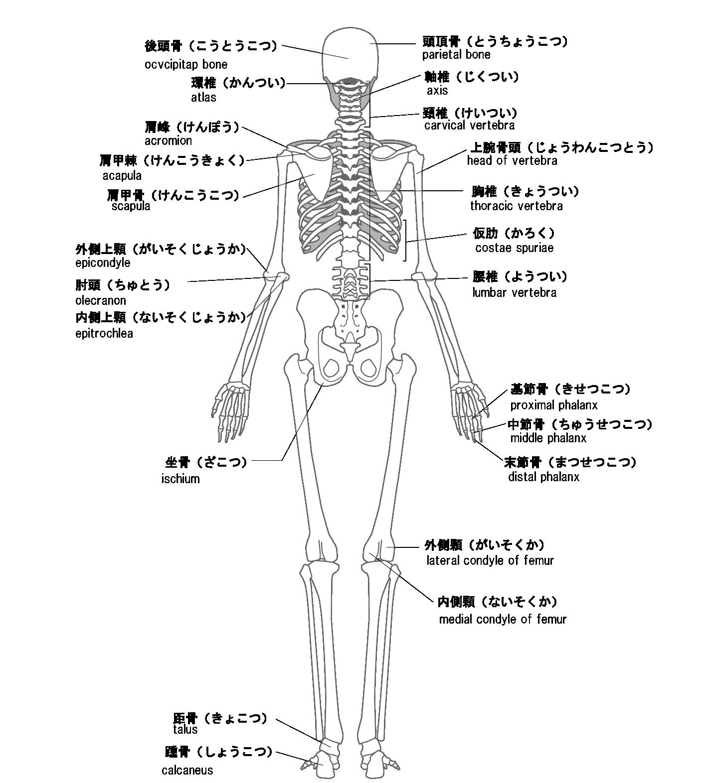 全身の骨矯正 後ろ
