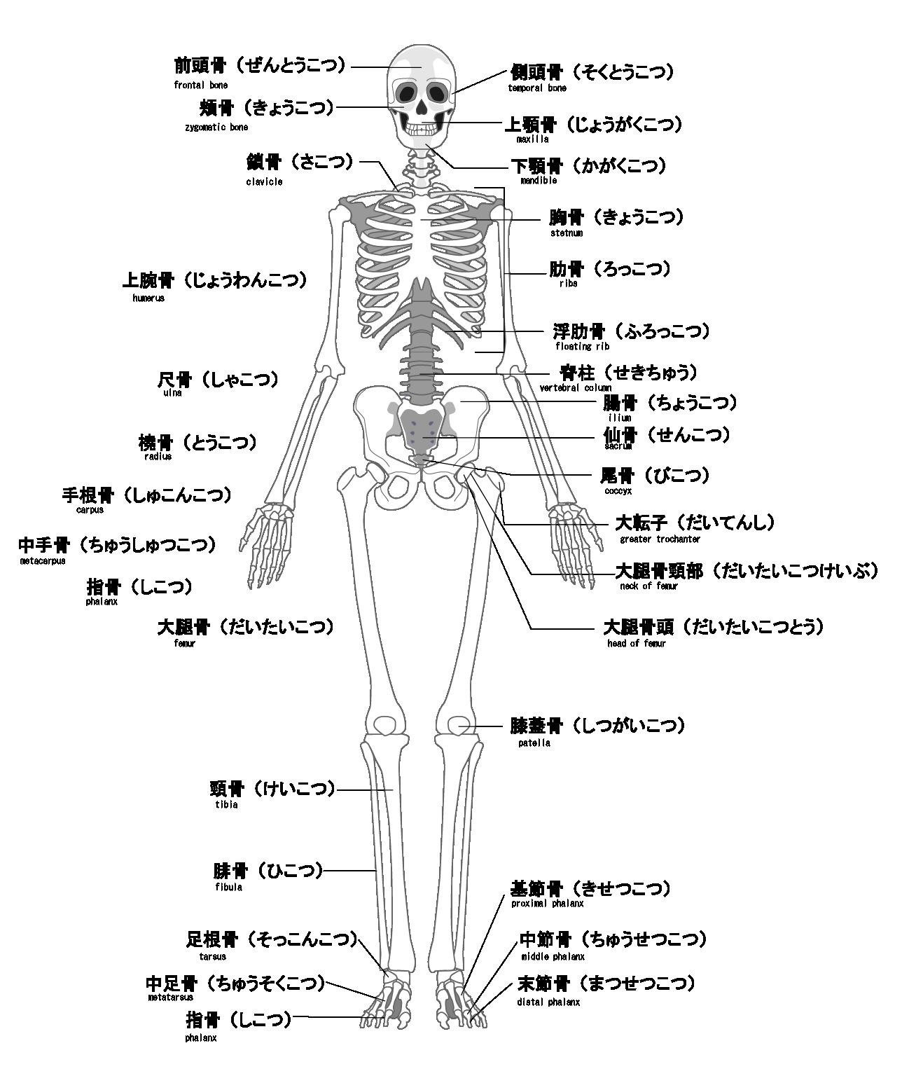 全身の骨や関節を矯正