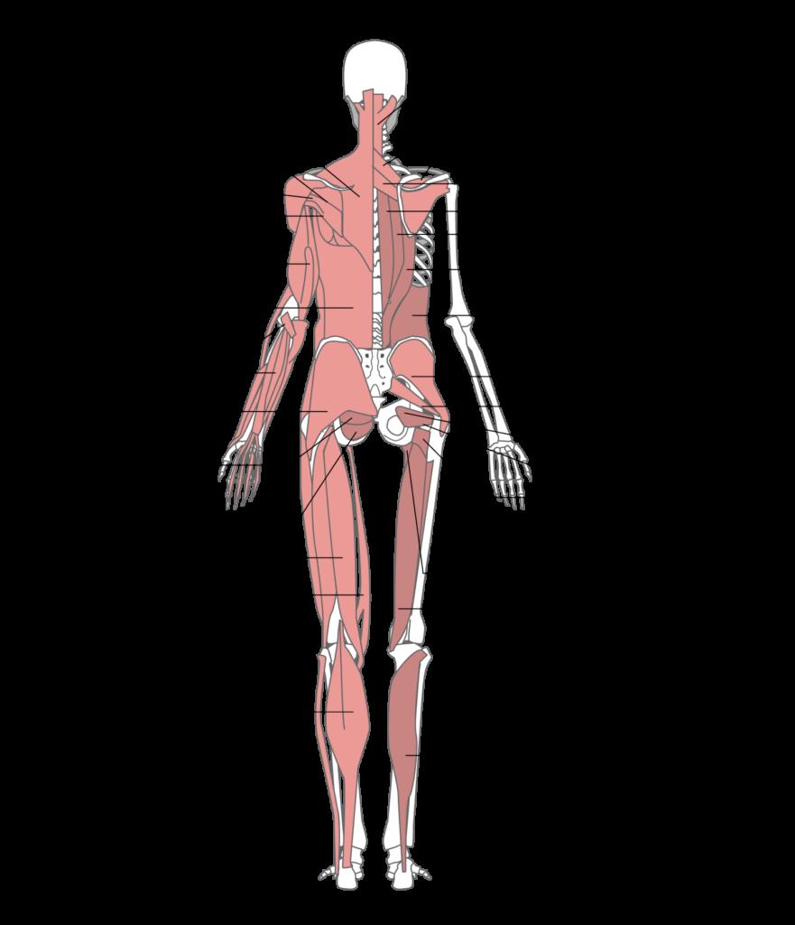 腰や全身の筋肉調整