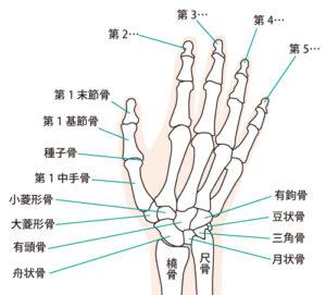 手指の骨や関節を矯正